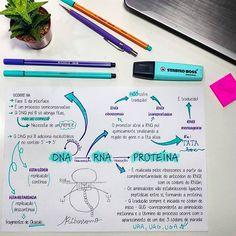 Dica de Biologia: #DNA e #RNA na #proteína. #enem #biologia #resumo #mapamental