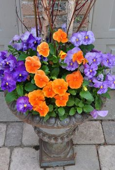 Bolder colors than normal - love this pansy combination