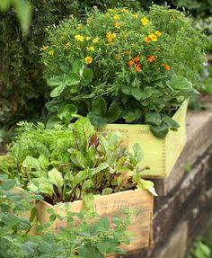 veggie container garden