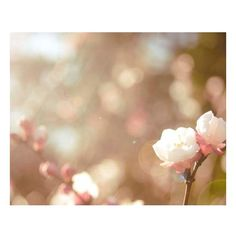 Beautifull Backgrounds ❤ liked on Polyvore featuring backgrounds, pictures, photos, flowers, other and wallpapers