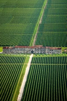 Fields of Vineyards and Old County House in Veneto Italy