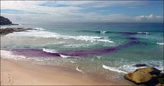 Purple dye shows the flow of a rip current at Tamarama Beach in Sydney. Summer Picture Outfits, Rip Current, Water Safety, Summer Pictures, Big Island, Marine Life, Picture Video, Surfing, Survival