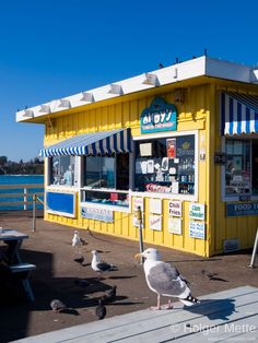 65 Best Where To Eat In Santa Cruz Images Best Places To Eat