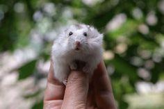 19. Hamster