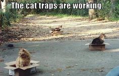 The cat traps are working like wonders!