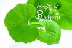 Efectul neurocognitiv al tratamentului alternativ cu ( Bacopa monnieri ) în boala Alzheimer Ayurveda, Benefit, Plant Leaves, Plant, Epilepsy, Alternative