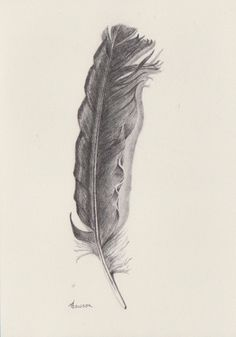 Original pencil drawing ~ soft feather by AnneLawsonArt on Etsy