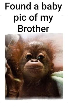 If you're itching to make fun of your brother, these funny brother memes are the answer. Check out our 30 hilarious memes you can use to get even. Funny Brother Birthday Quotes, Brother And Sister Memes, Brother Sister Love Quotes, Brother Humor, Sister Quotes Funny, Cute Funny Quotes, Funny Memes, Hilarious, Bro Quotes