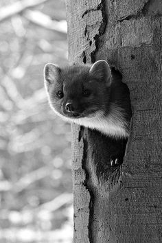 animals, Black and White Photography