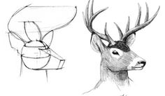 Google Image Result for http://hippie.nu/~nocte/tutorial-currentchapter/img/basics/anthro/head-construction-examples-1.jpeg