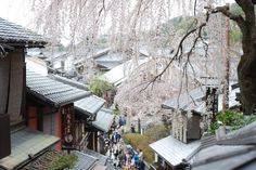 kyoto sannenzaka cherry blossom