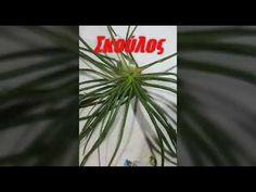 Αγρια χορτα για σαλατα( Κρήτης) - YouTube Cooking, Youtube, Plants, Fun, Kitchen, Planters, Plant, Planting, Cuisine