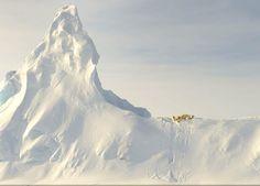 Osos polares en Nunavut, Canada