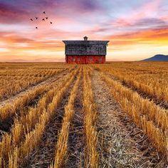 Photo The Birds and the Barn by Bruce Hood on 500px