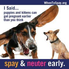 Spay & Neuter!