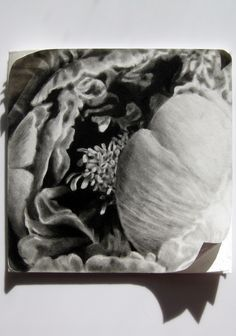 Magnificent rendering of the Peony - charcoal drawing on board by Hobart artist Gina Haywood. National Art School, Charcoal Drawing, Printmaking, Flora, Tapestry, Drawings, Board, Artist, Painting