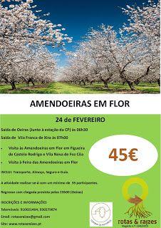 Rotas e Raizes: Amendoeiras em Flor - 24 de Fevereiro