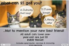 Great adoption promotion from the ASPCA of Sacramento, CA - http://www.sspca.org/