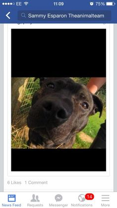 #urgent #time up in pound and #foster backed out today #rbu agreed #transport #needs a home #dog friendly #k9hour pic.twitter.com/YxsCEvYhI6