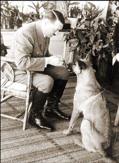 It was no secret that Hitler was an avid animal lover. Here he's giving a tidbit to a canine friend. His favorite Alsatian, Blondie, was with him to the very last day; she was poisoned by Hitler himself shortly before he and Eva Braun-Hitler committed suicide in the chancellery bunker.