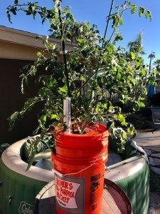 Self watering portable garden pot do it yourself city weve found the answer a diy self watering portable garden pot now that we have become successful at growing a healthy garden in our raised beds workwithnaturefo