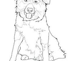 Australian Shepherd coloring page from Dogs category. Select from ...