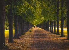 Marvelous allee by thstaepke trees street germany alley hannover allee herrenh user g rten thstaepke
