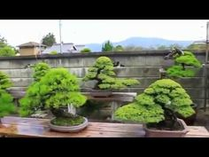 SMALL TREES THE BEST GIFT FOR LUCK HOME