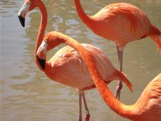 My flamingo pic from the San Diego zoo