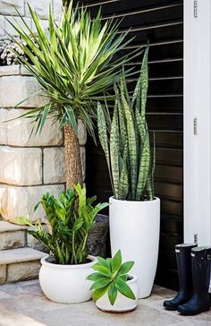 Garden Design Different pots with different plants, various heights of green - Style-savvy renovator Tara Dennis reveals how to turn plain pots into pretty planters - by Jane Parbury Patio Plants, Indoor Plants, House Plants, Front Porch Plants, Plants By The Pool, Plants In Pots, Tall Potted Plants, Potted Succulents, Leafy Plants