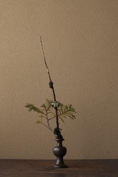 2012年2月22日(水)      杉に菌エイ(菌が寄生してできた瘤)があります。背筋が伸びる姿。  花=杉(スギ)、檜(ヒノキ)  器=古銅亜字形華瓶(鎌倉時代)