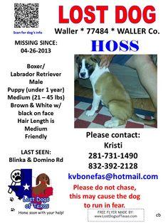 Missing family pet