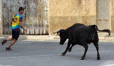 Santacara: Vacas de Pedro Dominguez Año 2015 (8) Goats, Animals, Cows, Animales, Animaux, Animal, Animais, Goat