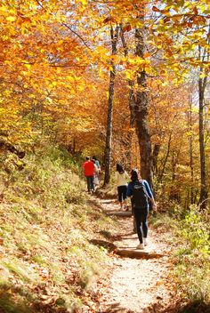 Appalachian Trail...LOT OF WALKING WHEN I WAS YOUNGER..WAS FUN IN KNOXSVILLE TN