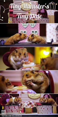 Tiny hamsters go on a tiny Valentine's Day date and eat tiny spaghetti and meatballs! Cuteness overload