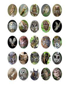 Owl Printable Digital Collage Sheet Images 40mm X by shadowdancer2, $3.00