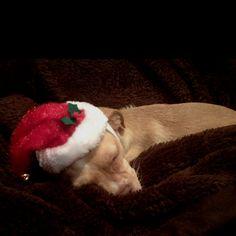 Sleepy christmas puppy