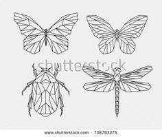 Vector. Set contour polygonal insects. Abstract geometric butterfly, dragonfly, beetle. Vector.