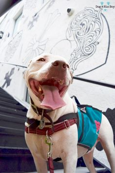The Lowdown on Living with a Deaf Dog: Tips & Advice