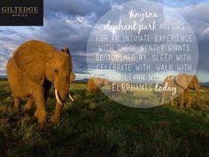 Garden Route | Knysna Elephant Park