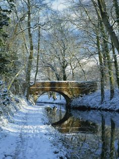 Basingstoke Canal in winter