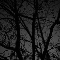 【escapetrail】さんのInstagramをピンしています。 《#森#木#枝#夕闇#夜#星#冬#風景#白黒#モノクロ#ファインダー越しの私の世界#写真好きな人と繋がりたい#forest#tree#branch#evening#night#dusk#winter#dark#star#melancholy#mystic#mysterious#landscape#blackandwhite#blackandwhitephotography#monochrome》