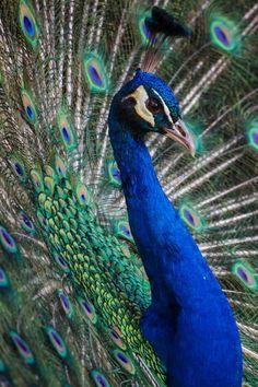 Love Wallpaper, Bird, Wallpaper Of Love, Birds