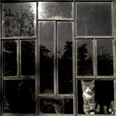 Alex Zernosek :: cats by the window, 2008