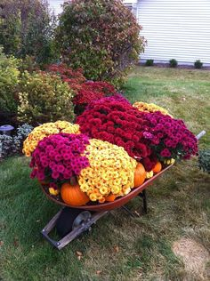 Wheelbarrow full of mums, pumpkins, and gourds in front of other blooming Fall…