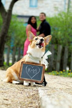 Maria and Kyle of Minneapolis included 9 month-old #Corgi Lulu in their engagement photos. Naturally!