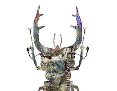 Nature Images, New Work, Moose Art, Behance, Check, Animals, Animales, Animaux, Animal