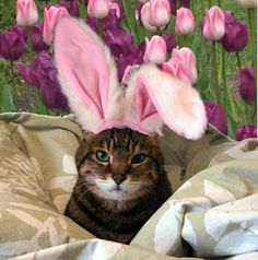 21 Adorable Animals Dressed Up For Easter   Her Campus