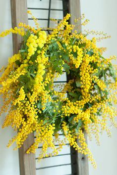 Mimosa wreath. Reminds me of Spring.