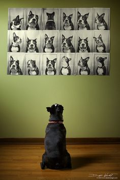 The Many Faces Of Otto | Flickr - Photo Sharing!  This would be so fun to do with Guinness